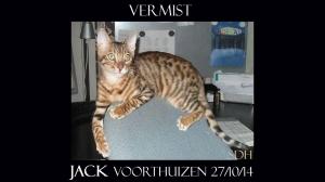 VOORTHUIZEN Zevenbergjesweg JACK (chip) ex-kater, cypers-wit Bengaal  27-10-14 sdh copy