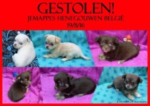 Jemappes gestolen pups